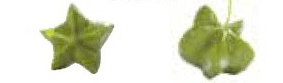 グリーンナッツ