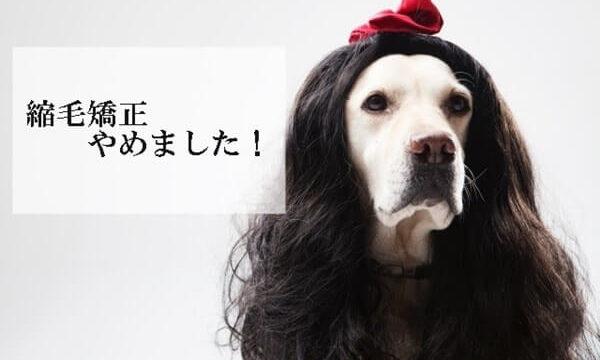 くせ毛のかつらをかぶった犬